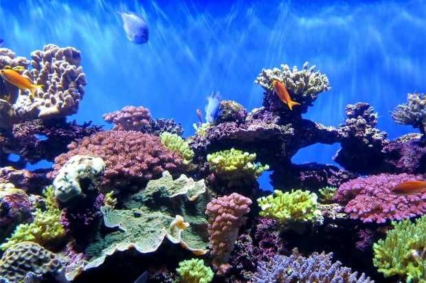 ONLY 55 PERCENT OF BALI'S CORALS IN GOOD CONDITION